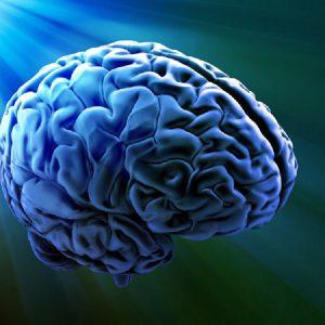 ظرفیت مغز