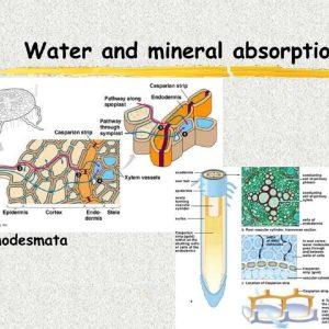 جذب مواد معدنی