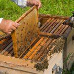 وسایل پرورش زنبورعسل