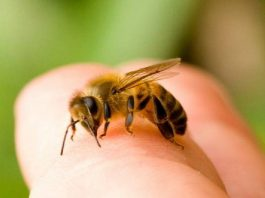 آمپول زهر زنبور