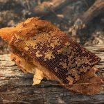 روش های برداشت محصول عسل