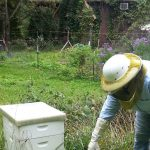 جابه جا کردن کلنی های زنبور عسل