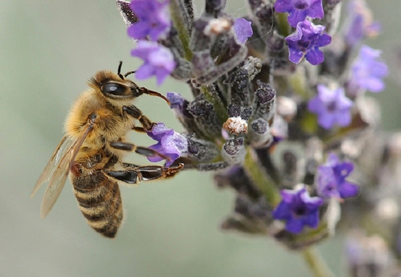 تغذیه زنبورعسل-1