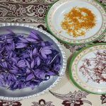 تاریخچه زعفران در ایران