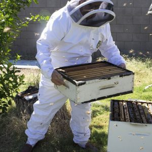 جلوگیری از بچه دادن زنبور عسل