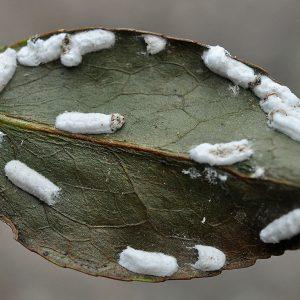 بیماری ها و انگل های گیاهان