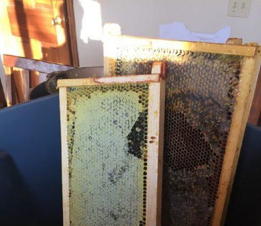 جدا کردن عسل از در پوش های مومی