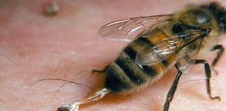زهر زنبورعسل