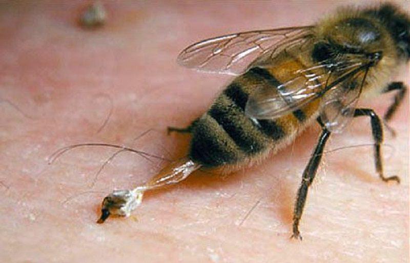 قرص زهر زنبور عسل