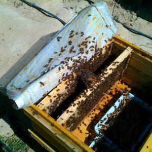 شربت دادن به زنبور