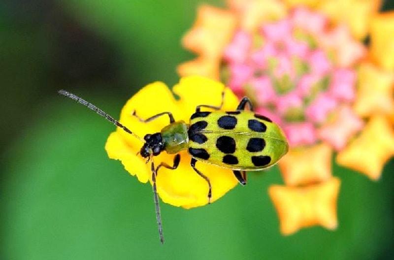 حشرات گرده افشان