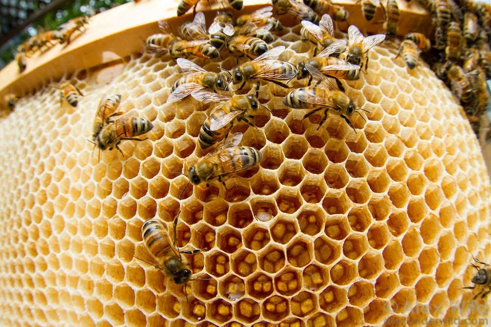 اصول زنبورداری