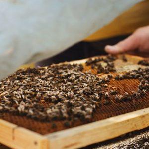 حساسیت به زهر زنبور عسل