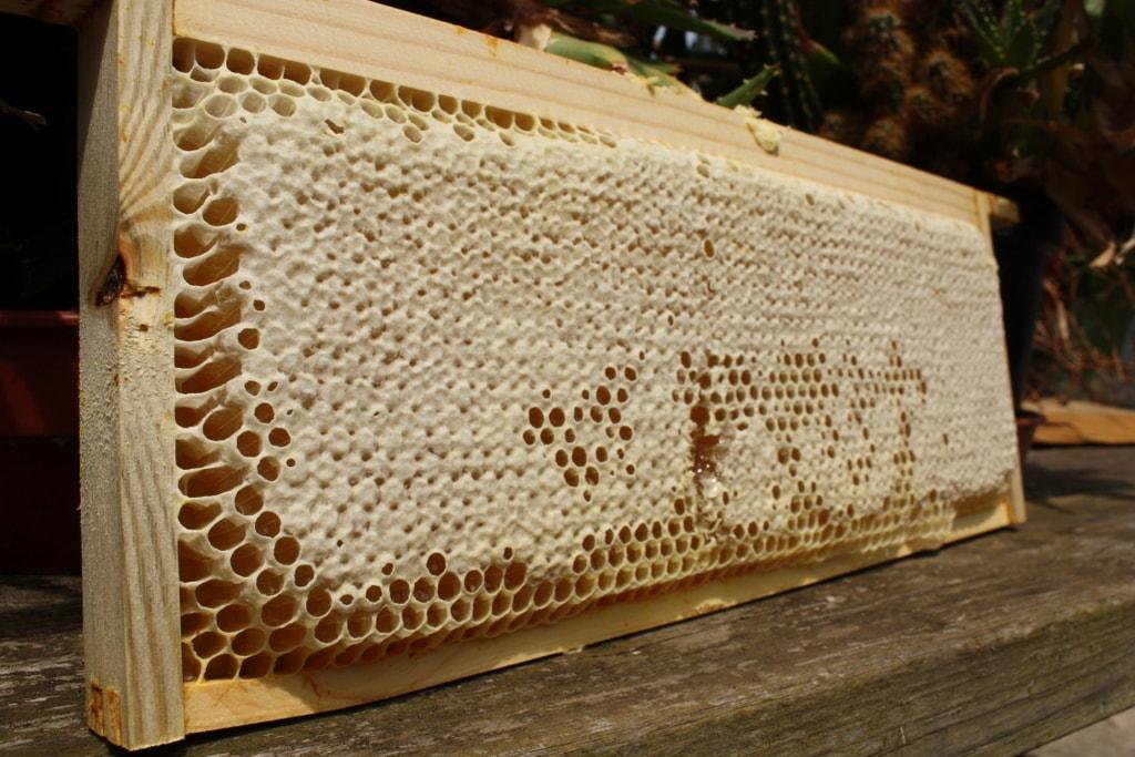 ساخت انواع عسل شان