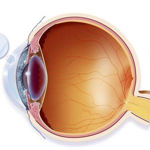 چشم در علم پزشکی