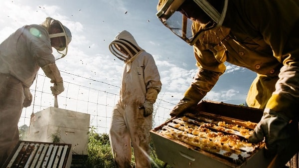 زمان برداشت عسل