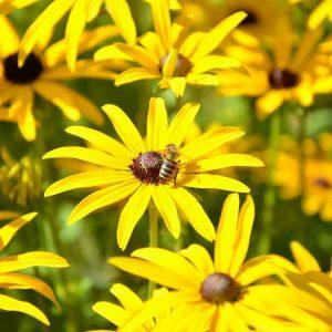 جمع آوری و نگهداری گرده گل