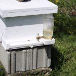 شربتها و غذاهای زنبور عسل