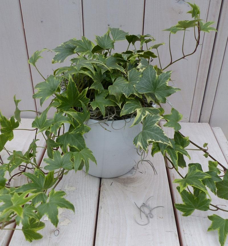 گیاهانآپارتمانی-3