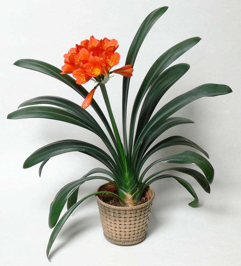 گیاهان و گل هایآپارتمانی-1
