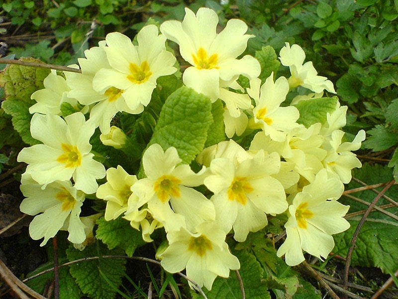 گیاهان و گل های آپارتمانی-2