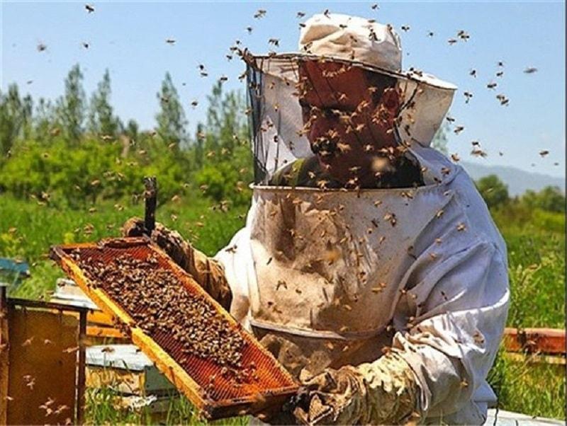 مواد شیمیایی دور کننده زنبور