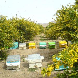 مدیریت صحیح در پرورش زنبور عسل