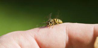 موارد تجویز زهر زنبور