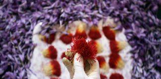 نیازهای اصلی تولید زعفران