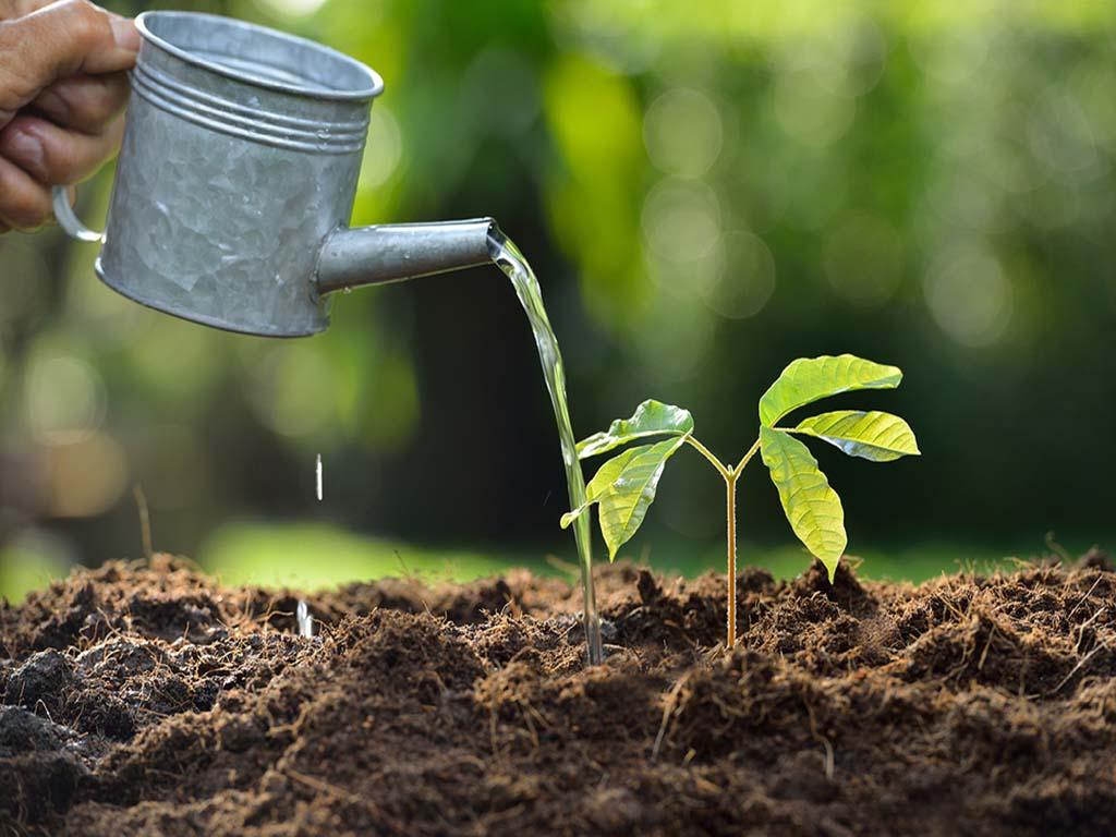 عناصر مورد نیاز رشد گیاهان