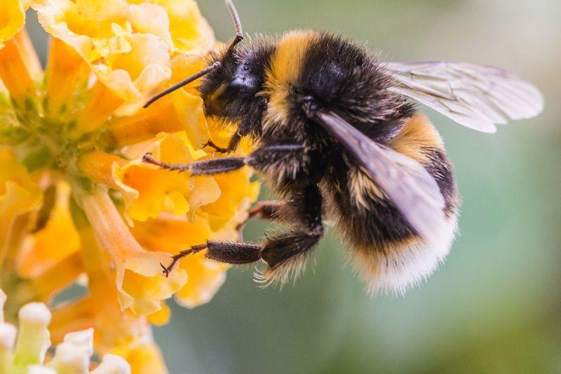 خواص زهر زنبور عسل