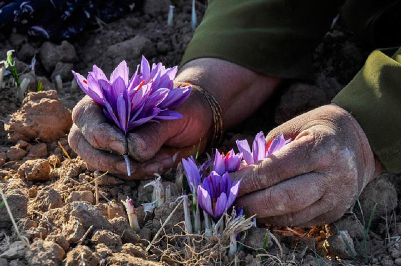 روش و هنگام چیدن گل