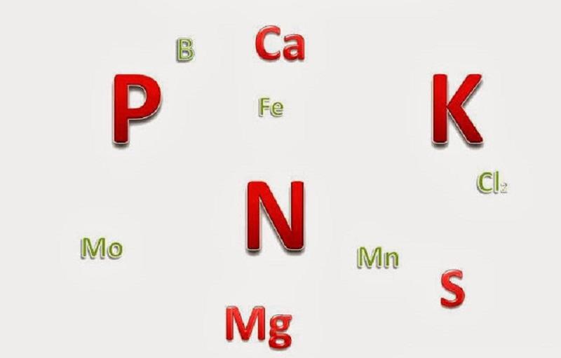 عناصر پر مصرف زعفران