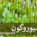 اسپوروگون