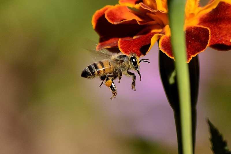 راهنمایی های لازم برای زنبور درمانی