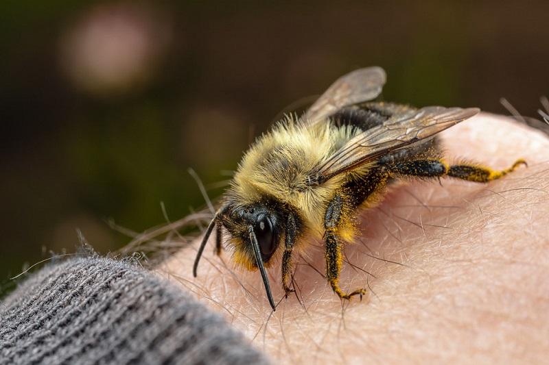 تحقیقات مرتبط با زنبور درمانی