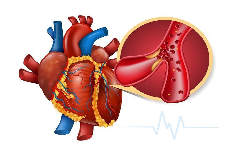 ۲- دستگاه قلبی – عروقی