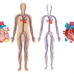 نفاط عکس العملی قلب