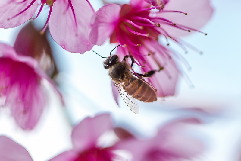 دلایل مصرف گرده گل در زنبور عسل