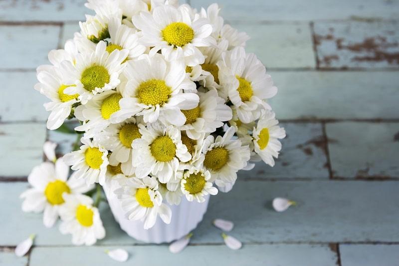 گل مینا دارای خواص مفیدی برای درمان بیماری هاست.