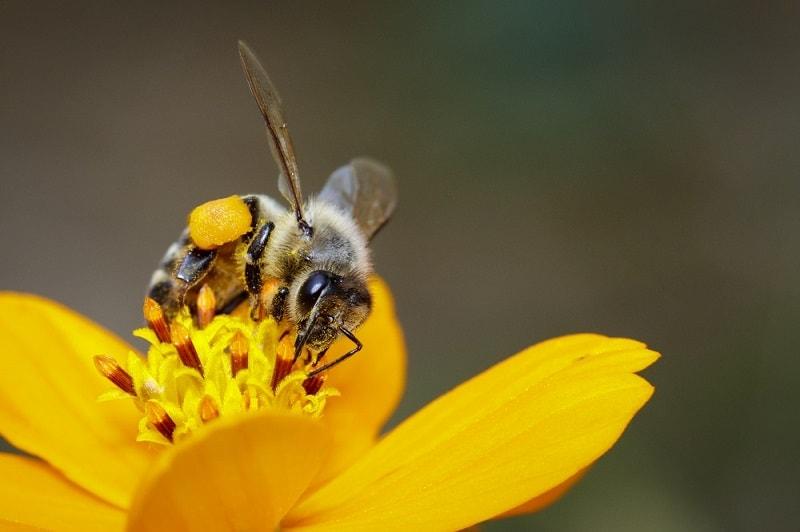 ترکیب شهد و تبدیل آن به عسل  -1
