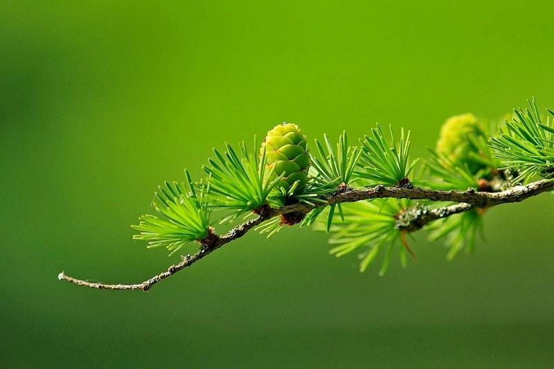 گیاهان عسل دهنده اصلی