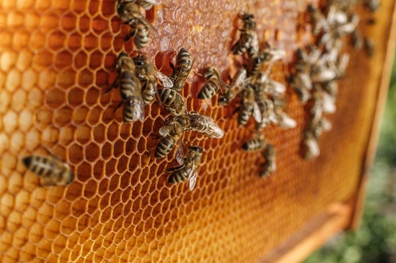 عدم ترکیب انواع عسل ها