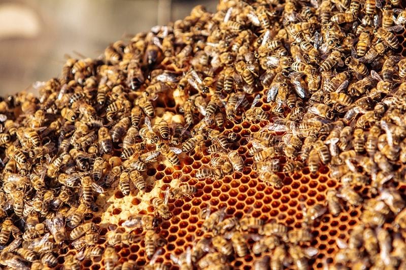 زنوبر عسل و تولید عسل