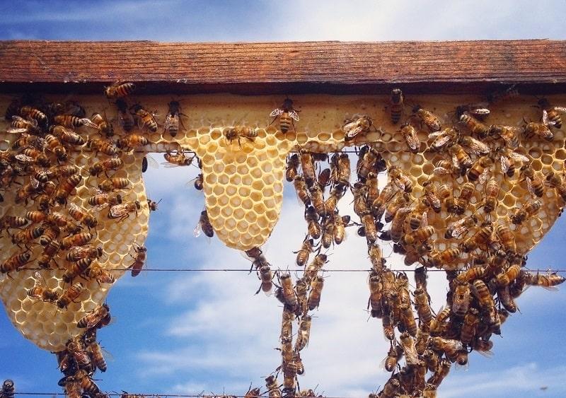 نحوه خانه سازی زنبور عسل