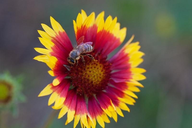 نکات مهم در تشخیص عسل طبیعی از تقلبی