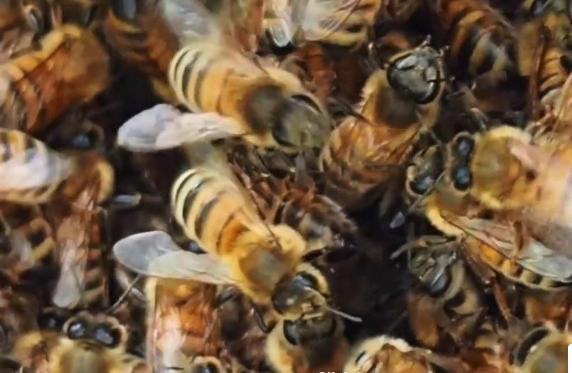 مراقبتها و کارهای زنبوردار در شهریور ماه