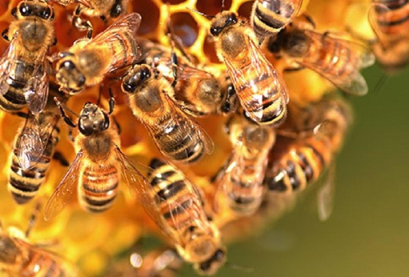 مهم ترین نکات در پرورش زنبور عسل