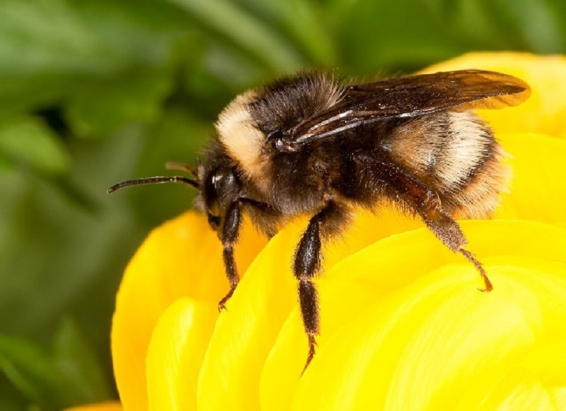 پرورش زنبور عسل در ایران