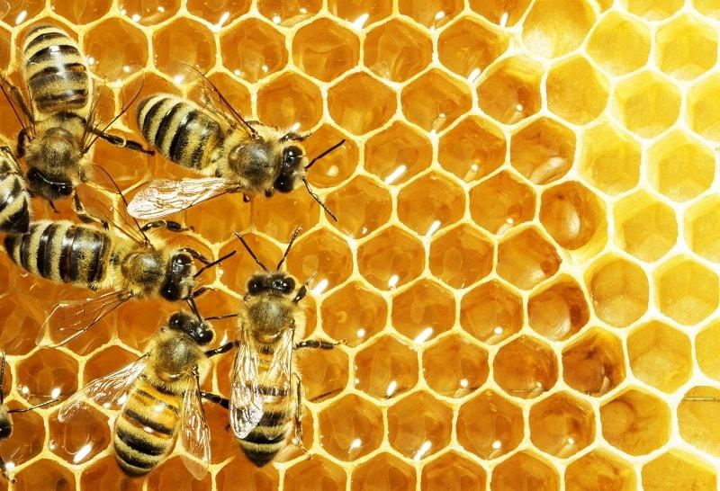 14- اهمیت فراوانی منابع شهد در اطراف زنبورستان
